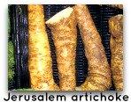 Jerusalem artichoke